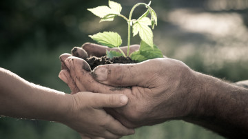 Hands of elderly man and baby holding a young plant against a natural background in spring. Ecology concept